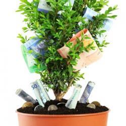 Geldgeschenk Baum